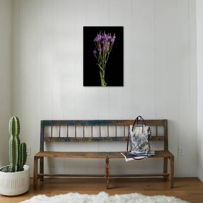 A Blue Vervain Plant, Verbena Hastata Photographic Print by Joel Sartore |  Art com
