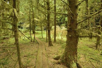 A Boardwalk Trail Through a Moss-Covered Temperate Rainforest-Jonathan Kingston-Photographic Print