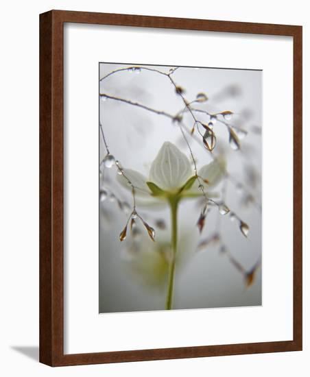 A bog star flower in a river-edge meadow-Michael Melford-Framed Photographic Print