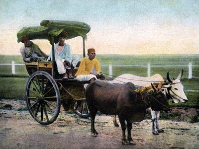 A Bombay Reckla, India, Early 20th Century--Giclee Print