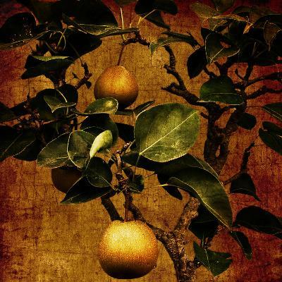 A Bonsai Pear Tree with Two Fruit Against a Rich, Gold Craquelure Background-Trigger Image-Photographic Print
