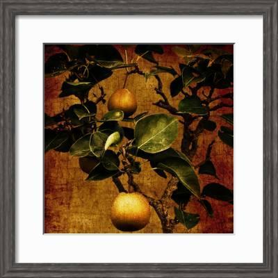 A Bonsai Pear Tree With Two Fruit Against A Rich Gold Craquelure Background Photographic Print Trigger Image Art Com