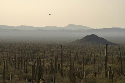 A Border Patrol Helicopter Looking for Illegal Activity in Organ Pipe Cactus National Monument-Bill Hatcher-Photographic Print