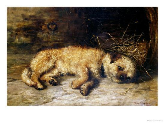 A Border Terrier Puppy-Philip Eustace Stretton-Giclee Print