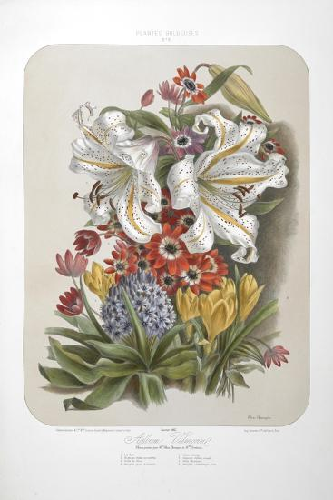 A Bouquet Of Flowers Including Crocuses and Lilies-Elisa Champin-Giclee Print