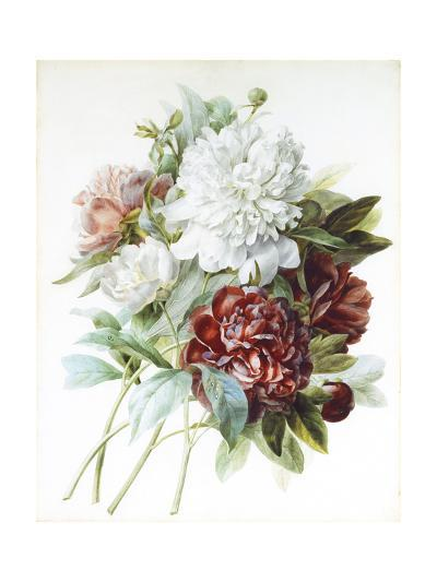 A Bouquet of Red, Pink and White Peonies-Pierre-Joseph Redout?-Giclee Print