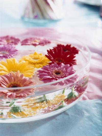 A Bowl of Flowers Floating in Water (Table Decoration)-Alexander Van Berge-Photographic Print