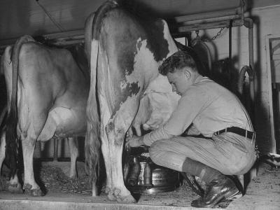 A Boy Milking a Cow--Photographic Print