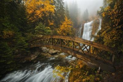 A Bridge in the Forest-Enrico Fossati-Photographic Print