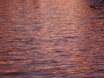 A Bright Pink Sunrise Reflects on the Rippling Water in Florida-Stacy Gold-Photographic Print