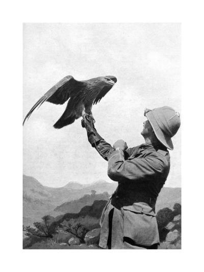 A British Officer with a Tamed Golden Eagle, Salonika, Greece, First World War, 1914-1918--Giclee Print
