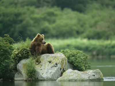 A Brown Bear Resting on a Rock at the Waters Edge-Klaus Nigge-Photographic Print