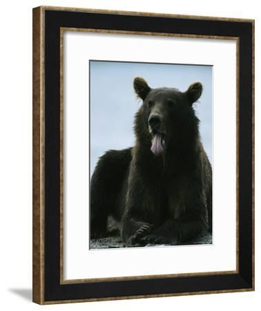 A Brown Bear Rests Along a Rivers Edge-Klaus Nigge-Framed Photographic Print