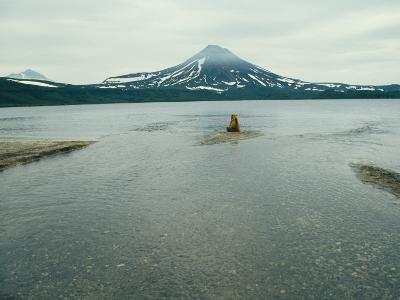 A Brown Bear Sitting on a Sandbar in a River Near a Volcanic Mountain-Klaus Nigge-Photographic Print