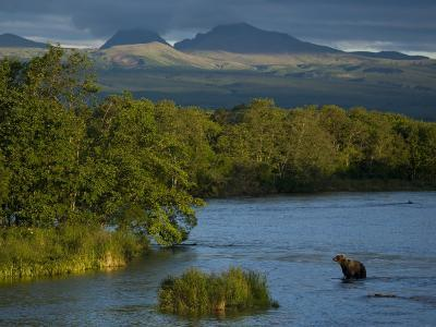 A Brown Bear Wading in a River in the Kronotsky Nature Reserve-Michael Melford-Photographic Print