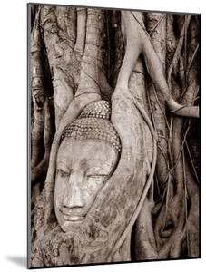 A Buddha Head Trapped in a Tree