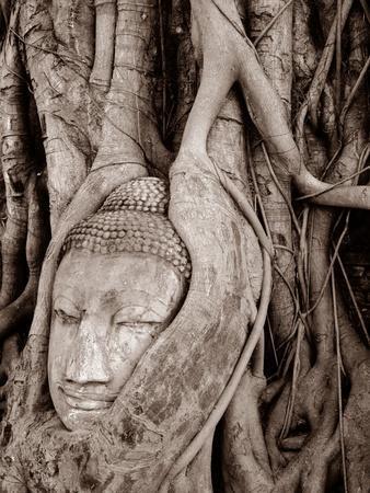 https://imgc.artprintimages.com/img/print/a-buddha-head-trapped-in-a-tree_u-l-pjkx730.jpg?p=0
