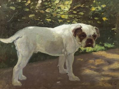 A Bulldog on a Garden Path-Cecil Aldin-Giclee Print