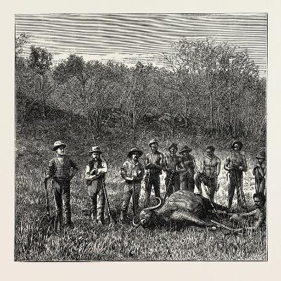 A Bullock Carriage in Cochin-China--Giclee Print