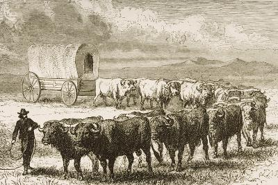 A Bullock Wagon Crossing the Great Plains Between St. Louis and Denver, C.1870, from 'American…--Giclee Print
