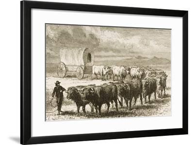 A Bullock Wagon Crossing the Great Plains Between St. Louis and Denver, C.1870, from 'American…--Framed Giclee Print