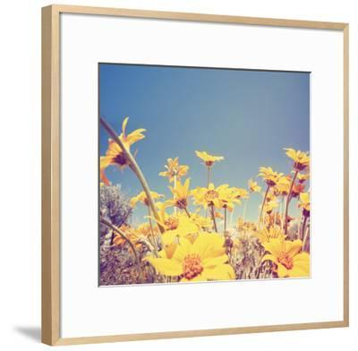 A Bunch of Pretty Balsamroot Flowers Done with a Soft Vintage Instagram like Effect Filter-graphicphoto-Framed Art Print