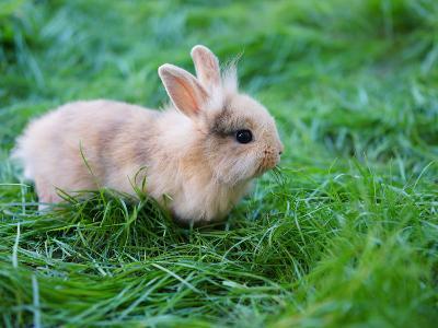A Bunny Sitting on Green Grass-zurijeta-Photographic Print