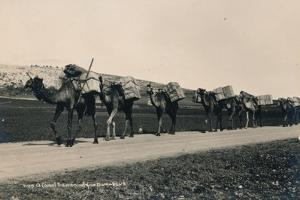 A Camel Train Bound for Damascus, 1936