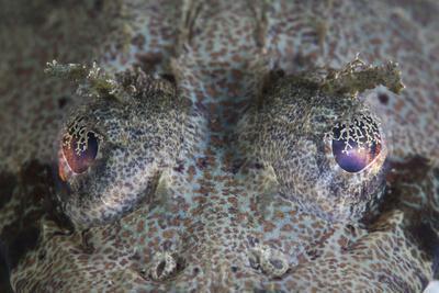 https://imgc.artprintimages.com/img/print/a-camouflaged-horned-flathead-lays-hidden-on-a-sandy-slope_u-l-q12snjv0.jpg?p=0