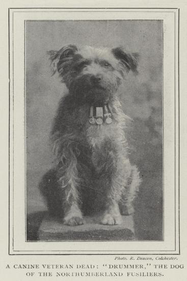 A Canine Veteran Dead, Drummer, the Dog of the Northumberland Fusiliers--Giclee Print