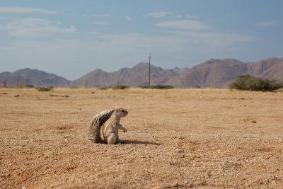 A Cape Ground Squirrel, Xerus Inures, on the Look Out in Solitaire, Namibia-Alex Saberi-Photographic Print