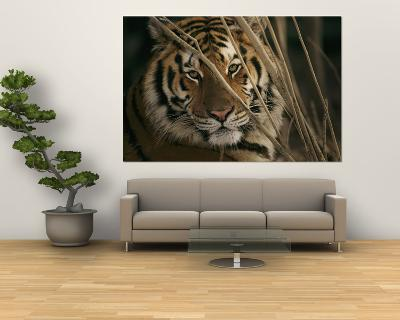 A Captive Tiger Shows a Formidable Expression--Giant Art Print