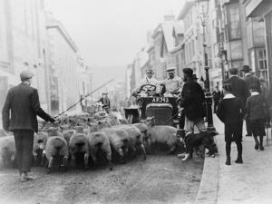 A Car Surrounded by Sheep, Lewes High Street, East Sussex
