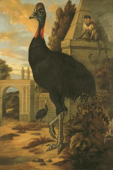 A Cassowary-Francis Barlow-Giclee Print