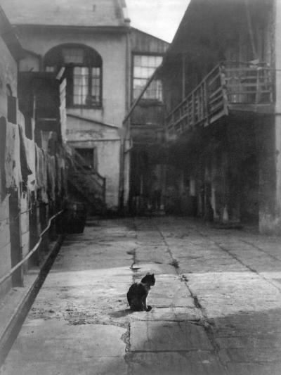 A Cat in a New Orleans Courtyard--Photographic Print