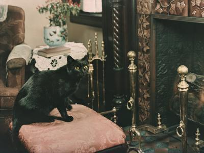 A Cat is Perched on an Ottoman in Front of a Fireplace-Willard Culver-Photographic Print