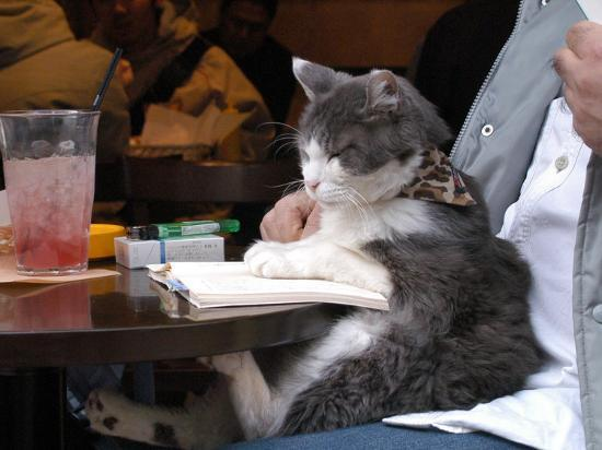 A Cat Joins its Owner Reading a Book at a Tokyo Cafe--Photographic Print