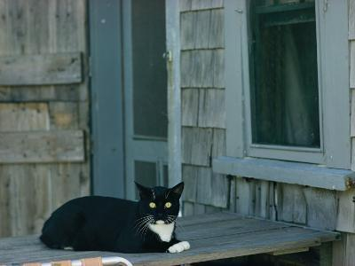 A Cat Sits on a Porch-James L^ Stanfield-Photographic Print
