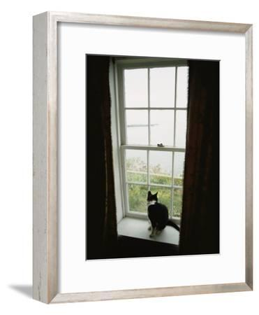 A Cat Sitting on a Windowsill-Bill Curtsinger-Framed Photographic Print