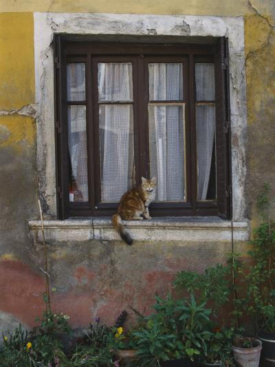 A Cat Sitting on an Exterior Window Sill in Tournus-Todd Gipstein-Photographic Print