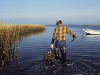 A Clam Digger Carries His Haul Through Chincoteague Island Marshes-Medford Taylor-Photographic Print
