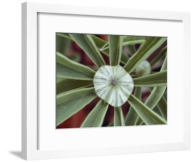 A Close-up of a Raindrop in the Center of a Lupine Leaf-George F. Mobley-Framed Photographic Print