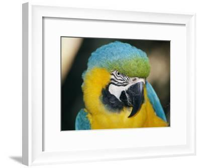 A Close-up of the Head of a Macaw-Stephen St^ John-Framed Photographic Print