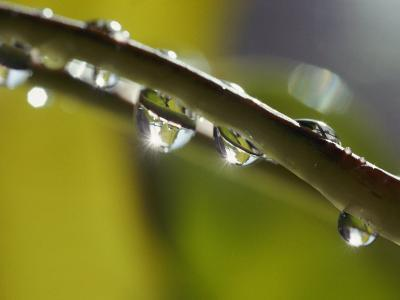A Close-up of Water Droplets on a Blade of Grass-Todd Gipstein-Photographic Print