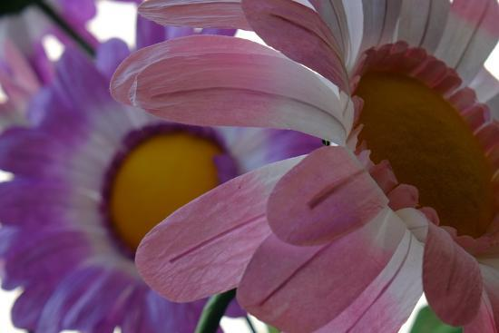 A Close Up View of Two Silk Flowers-Paul Damien-Photographic Print