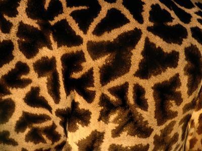 A Close View of a Giraffes Irregular Spots-Michael Nichols-Photographic Print