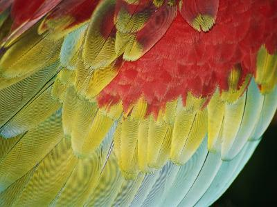 A Close View of the Wing of a Macaw-Stephen St^ John-Photographic Print