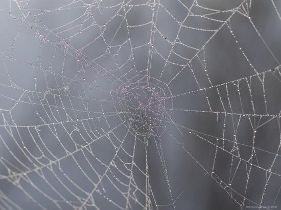 A Close View of Water Drops on a Spider Web-Taylor S^ Kennedy-Photographic Print