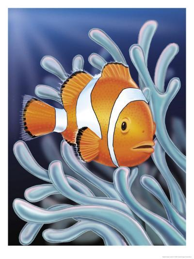 A Clown Fish Swimming by Sea Anemones--Art Print
