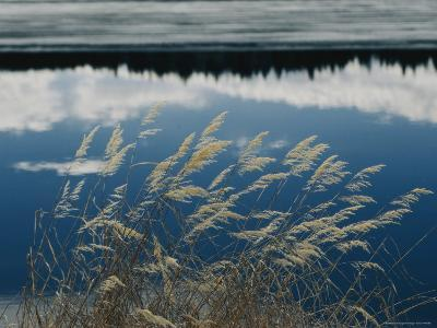 A Clump of Grasses is Framed by Reflections of Sky and Trees in the Lake-Raymond Gehman-Photographic Print